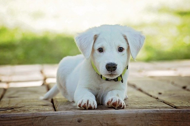 המדריך למאמצים המתחילים: מה עושים לאחר אימוץ כלב?